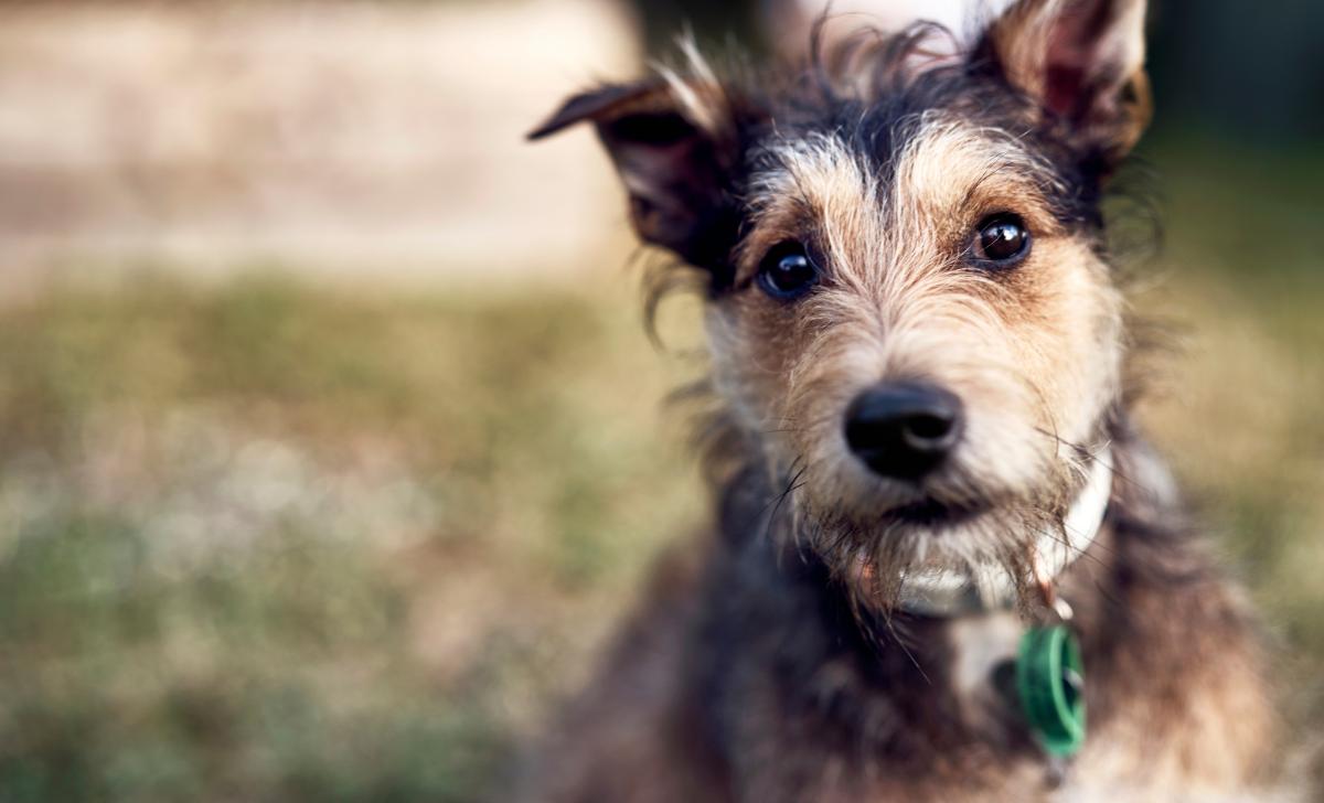 Support Pet Refuge